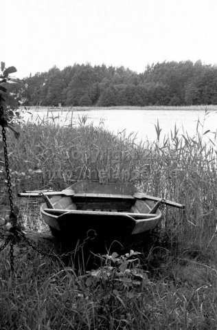 Boat in the reed. (1966)